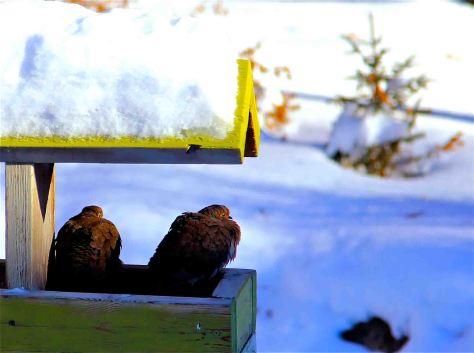 roosting doves