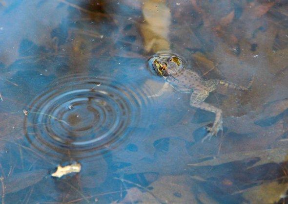 spring frog pond